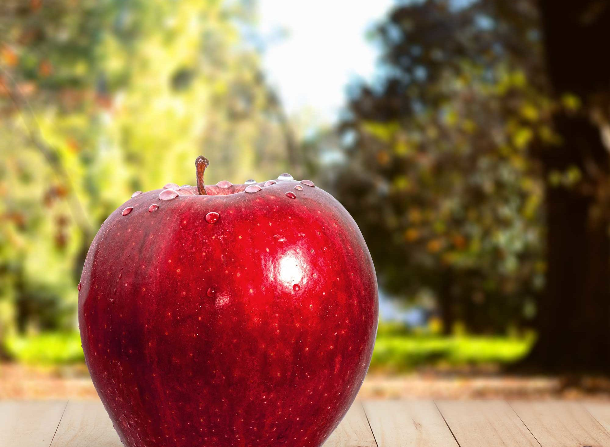 Where to Go Apple Picking in the Bay Area | 2019