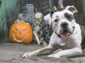 Howl-O-Ween: Halloween Paw-ty for the Pups | Mission Bay