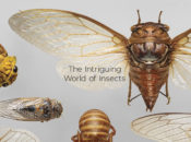 The Intriguing World of Insects: Lecture & Guided Tour | SFO Museum