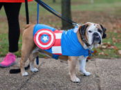 Hounds 4 Huntington's Dog Costume Walk | Petaluma