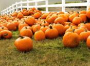 14th Annual Pumpkin Festival w/ Free Pumpkins | Mountain View
