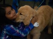 Golden Gate Kennel Club Dog Show | SF