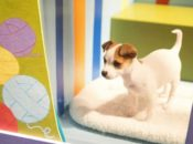 2019 Macy's Holiday Windows Unveiling: Adorable Puppies & Kittens | Union Square