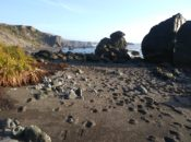 North Coast Adventure: Hike, Tide Pools, & Oyster Picking | Bodega Bay