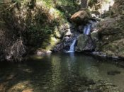 Free Waterfall Hike at Mount Tam | Mill Valley