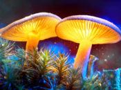 Exploratorium After Dark: Fungi | Pier 15
