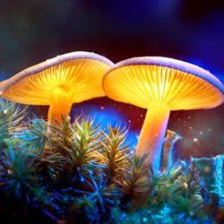 Mushroom square 734992102 0 250x250