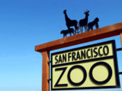 San Francisco Zoo Attempts to Reopen (Again) On July 15th