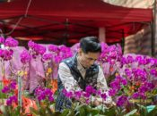 2020 Chinese New Year Flower Fair | Chinatown