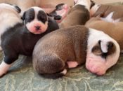 It's National Puppy Day! How to Foster a Doggy