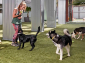 """""""Pet Camp"""" Offers SF Free Day of Doggie Daycare"""