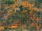 California's Poppy Bloom so Big You Can See It From Space