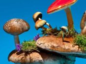 Virtual NightSchool at Cal Academy of Sciences: Fungus Among Us