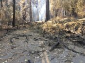 Big Basin Redwoods State Park: Latest Photos & Damage Report