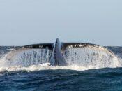 Whales Were Breaching at Ocean Beach This Weekend