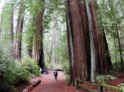 Big Basin State Park Plans for Limited Reopening by Memorial Day