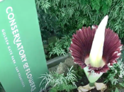 """SF's Smelliest """"Corpse Flower"""" is Blooming Again"""