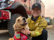 Adorable Doggy Gives Daily Comfort to Firefighters