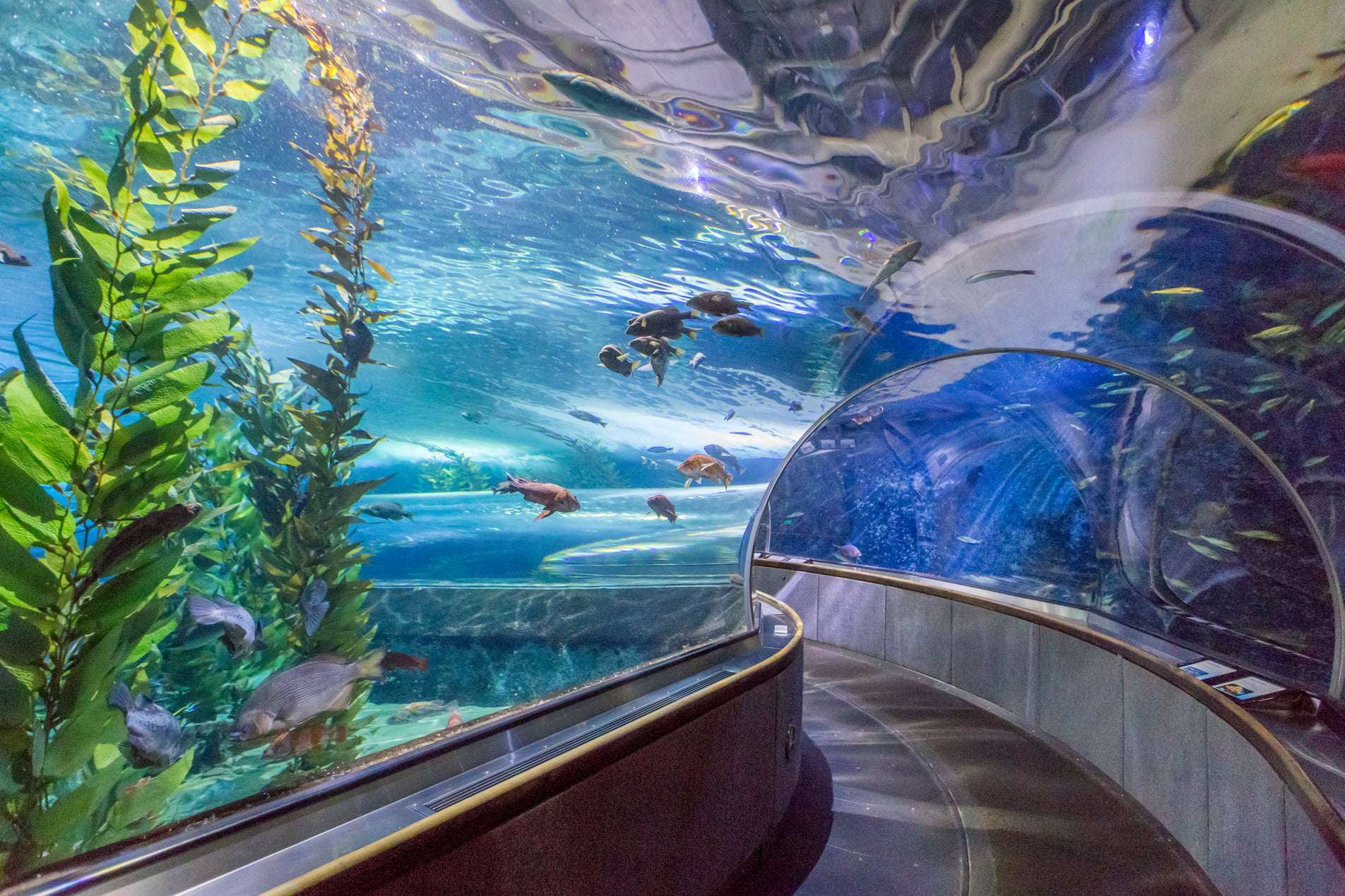 """SF's """"Aquarium of the Bay"""" at Pier 39 Opens Today"""