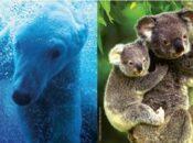 Virtual Wildlife Conservation Expo 2020