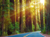 Five Ways You Can Help the Redwoods Recover