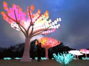 2020 Winter Lights Around The Bay