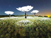 """An Amazing """"Lighted Forest"""" is Coming to Golden Gate Park"""