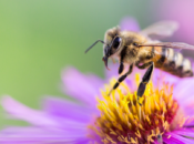 """""""Bee Colorful"""" with Bay Area Science Festival"""