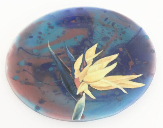 Plate 1 563x442