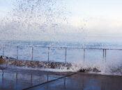 """Exploratorium's """"After Dark Online"""" Celestial—Rising Tides"""