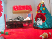 SF SPCA's Adorable Festive Holiday Puppy & Kitty Cams