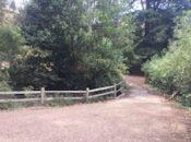 Glen Park Walk: Learn Movement Tips In Nature