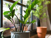 "Exploratorium's After Dark Online: ""House Plants"""