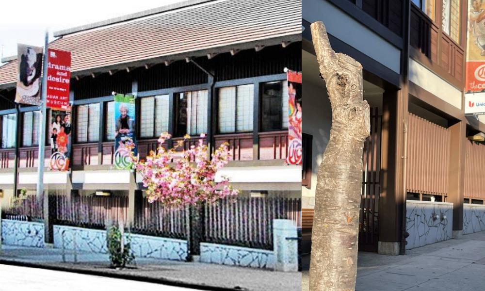 Japantown S Cherry Blossom Trees Were Vandalized