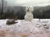 Bay Area Sees Rare Snow: Photos & Videos Around The Bay