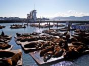 Sea Lions' 31st Anniversary at PIER 39 (Facebook Live Virtual Celebration)