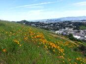 Children's Gardens with San Francisco Native Plants Webinar
