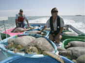 SF Zoo Aids Heroic Sea Turtle Rescue in Freezing Texas