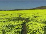Highway 1's Gorgeous Wildflower Superbloom