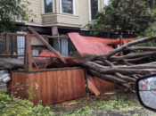Massive Fallen Tree Takes Out SF Restaurant's Outdoor Dining Parklet
