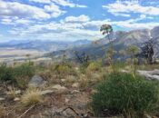 Effects of Altered Wildfire Regimes on California Plant Diversity Webinar