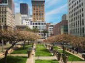 Cherry Blossoms Are Blooming in SF's Union Square