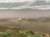 Man & 2 Dogs Rescued After 80ft Cliff Fall at Ft. Funston