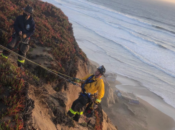 Firefighters Rescue Puppy Off Cliff at Fort Funston
