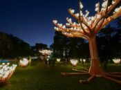 """Should SF Keep GG Park's """"Entwined"""" Lighted Forest Forever?"""
