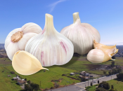 2021 Gilroy Garlic Festival Final Weekend (July 30 – Aug 1)