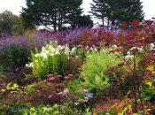 Healthy Soil, Healthy Garden, Healthy Planet