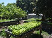The Edible Schoolyard Plant Sale (Berkeley)