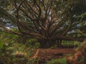 On Finding the Mother Tree