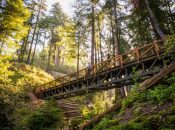 Amazing Big Sur Trail Reopens For First Time Since 2008